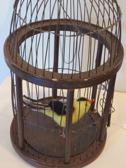 Goldfinch in bird cage