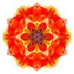 Flower mandala on white background.jpg