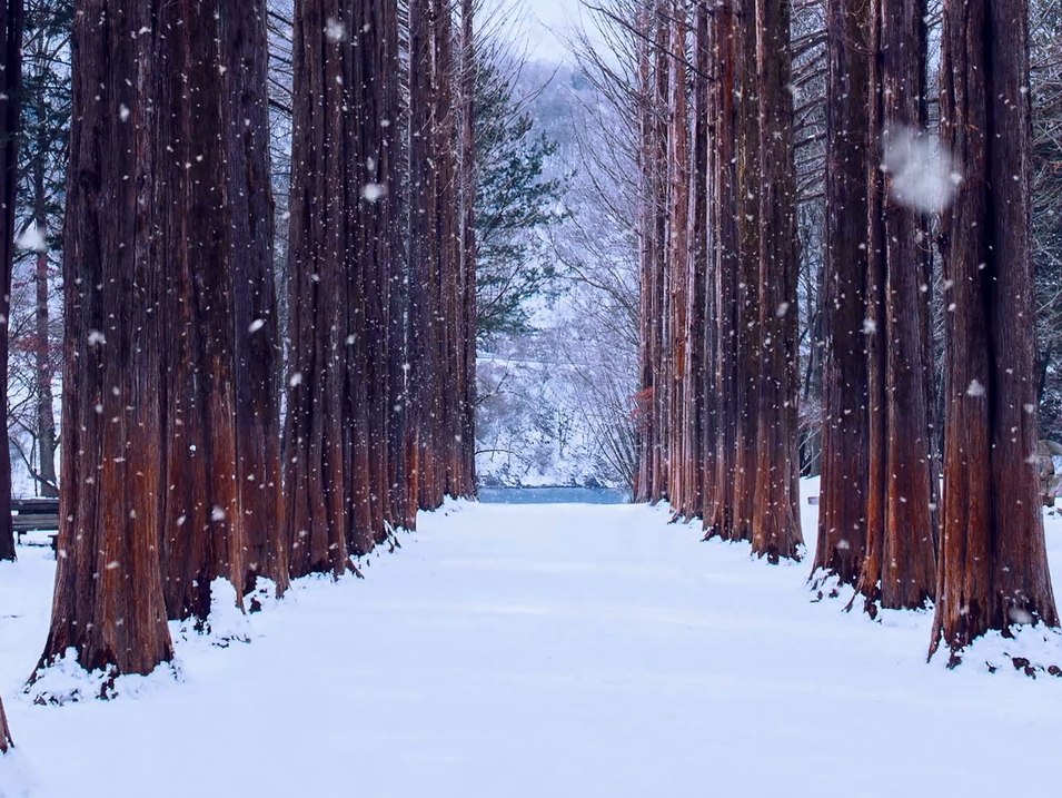 videoblocks-row-tree-and-snow-falling-in