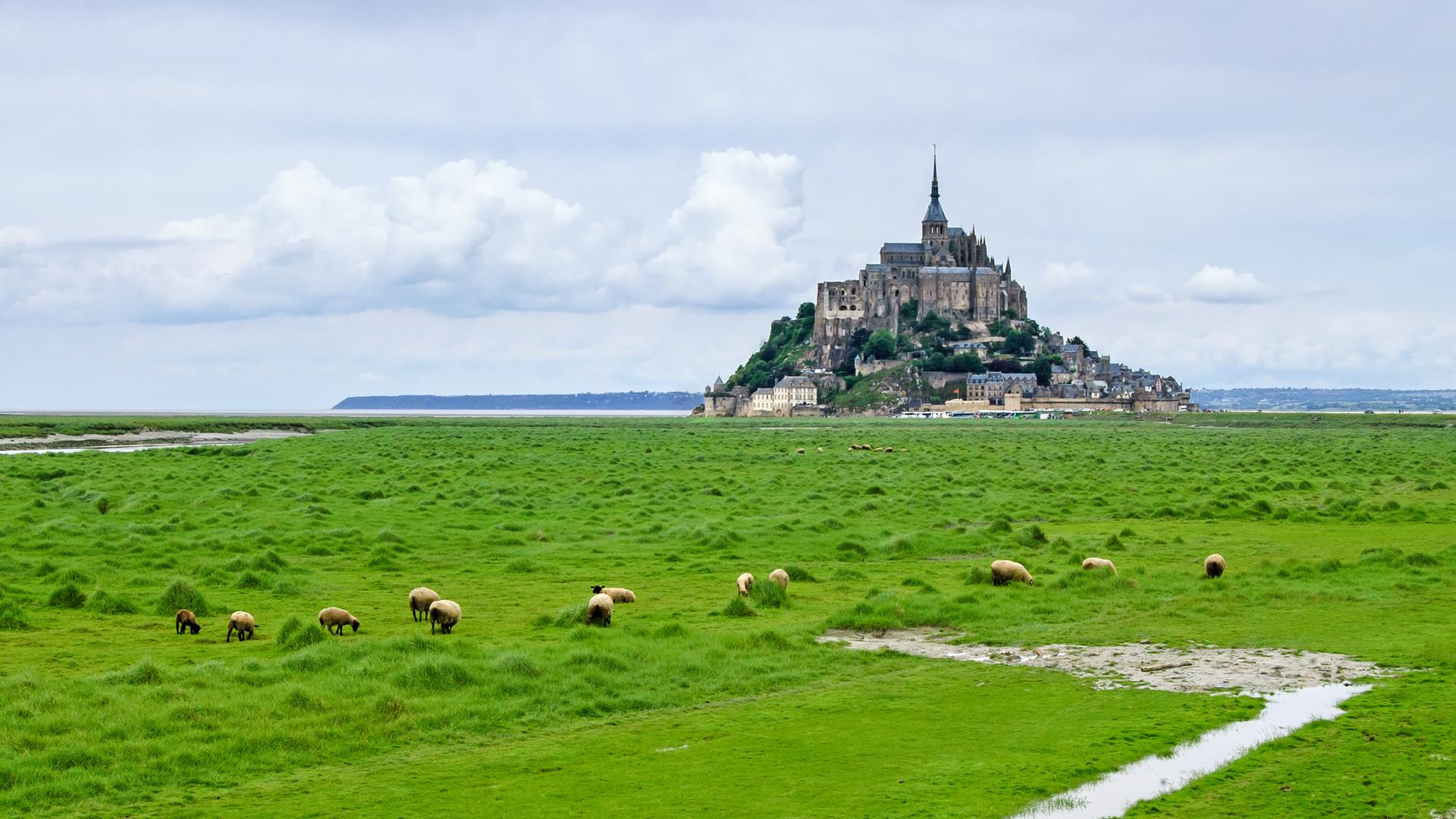 sheeps-grazing-near-mont-saint-michel-la