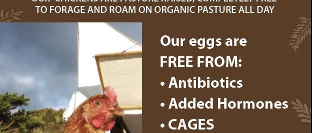Nduli Free Range Eggs (6)