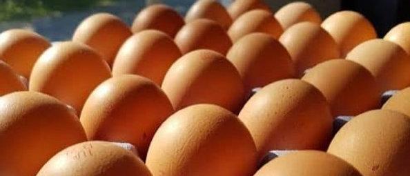 Msenge XL Eggs (30)