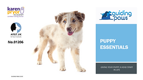 Puppy Essentials Header (1).png