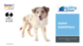 Puppy Essentials Header.png