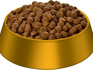 Raw or Kibble - what's best for your dog?