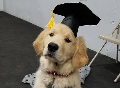 Puppy with grad cap.jpg