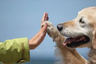 Dog and human high five.jpg