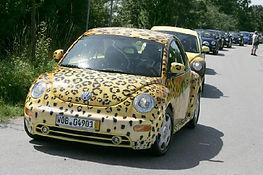 leopardbug1.jpg