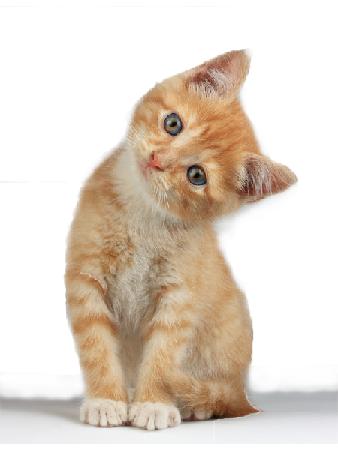 New Pet Consultation