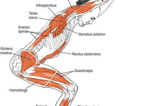Yoga Chair - Kako pravilno izvesti vajo?