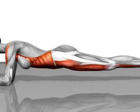 Kako pravilno izvajati vajo plank?