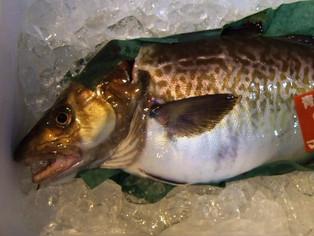 1月の旬のお魚は「真鱈」