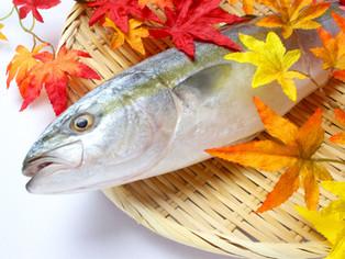 11月の旬のお魚は「ブリ」