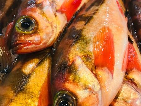 3月の旬のお魚は「めばる」