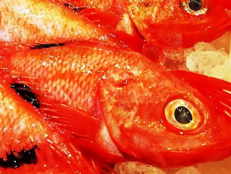 2月の旬のお魚は「きんき」