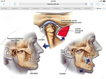 TMJ Temporomandibular Joint