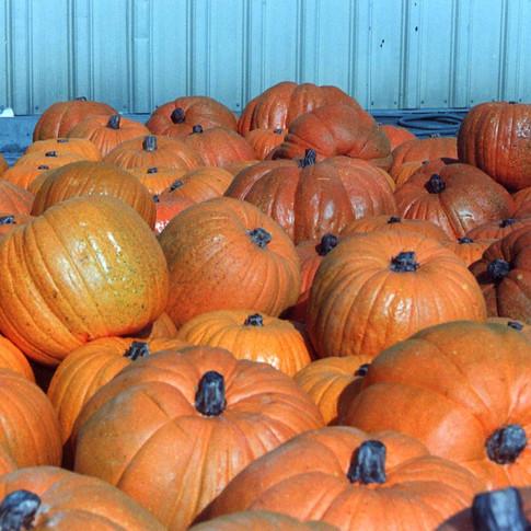 Pumpkins010.jpg