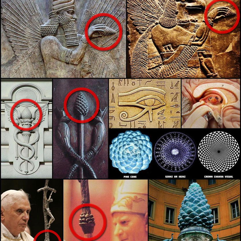 Pinecone and the Pineal Gland