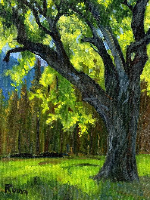 Backlit Tree, Springtime, Yosemite Valley