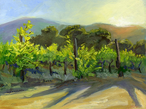 """Evening in the Vineyard #2""     11x14    oil on board"