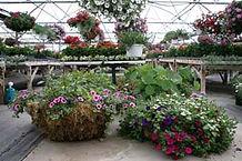 Greenhouse arrangements