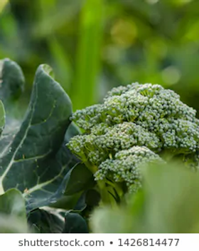 Broccoli.webp