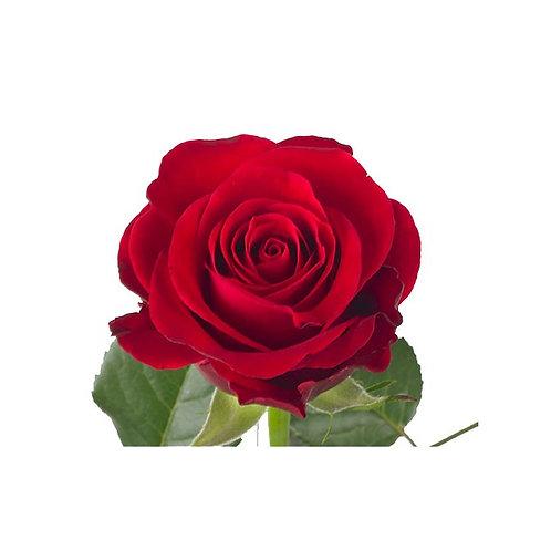 Rose Rouge 40cm
