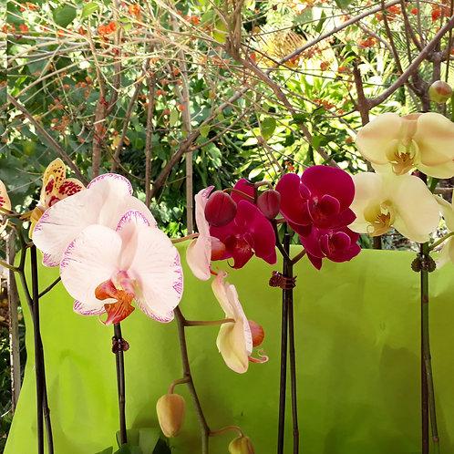 Pot Orchidée