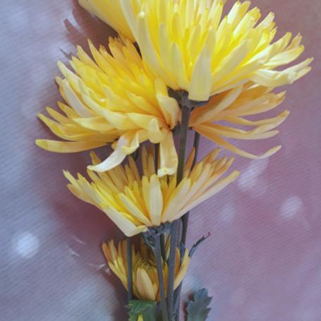 Chrysanthème Tokyo Jaune