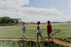 Spazieren auf den Feldern