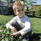 Jaro beim Erdbeeren ernten