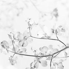 Spring%20Sisu_edited.jpg
