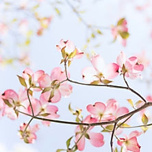 Spring season Sisu