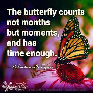 Butterfly VpA6dOkhUKg Erin Wilson CSLK.jpg