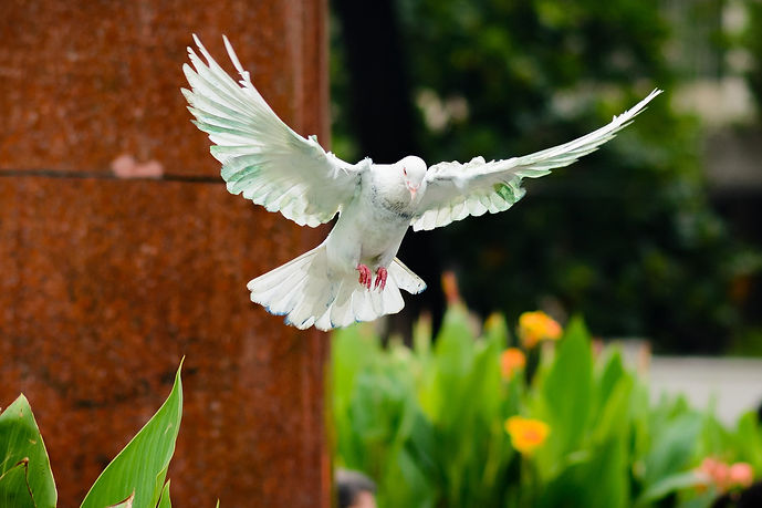 bird-2395142_1920.jpg
