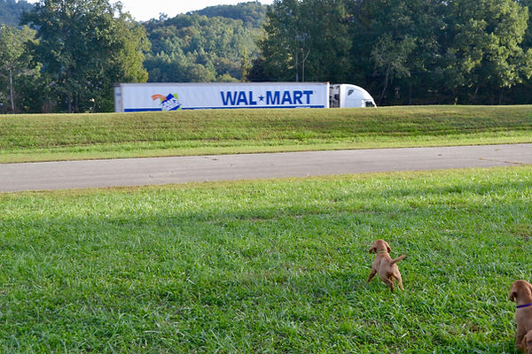 Puppies watching traffic from track.jpg