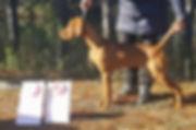Lux 5 mos old Puppy G1.jpg
