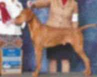Titan_Group_2_Raleigh cropped just dog.j
