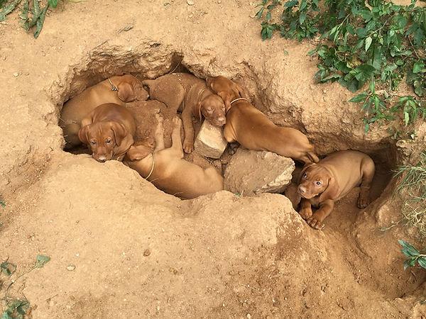 Puppy Archeologists.jpg