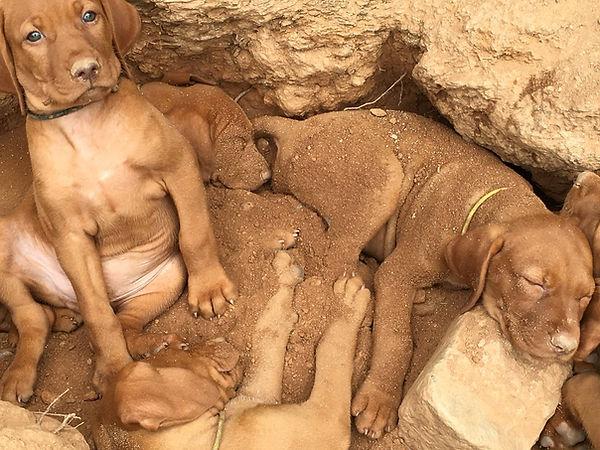 Puppy Excavators.jpg