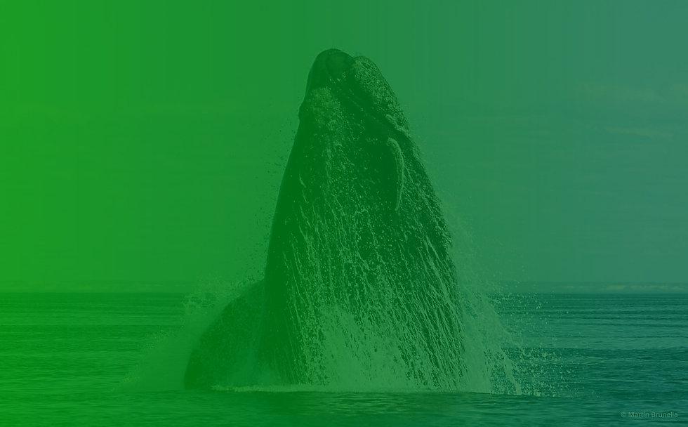 medi-ambiente-ballenas-las-grutas.jpg