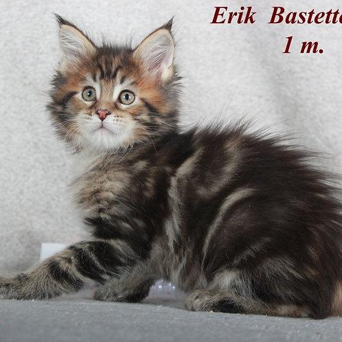 Erik Maine Coon black marble color male cat