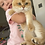 Thumbnail: 862 Afleck  British shorthair male kitten