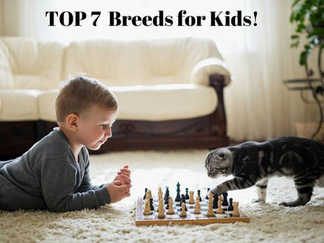 TOP 7 Breeds good for Kids!
