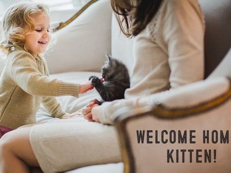 Kitten Care: Tips for Raising Kittens