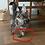 Thumbnail: 813 Xyl   Maine Coon male kitten