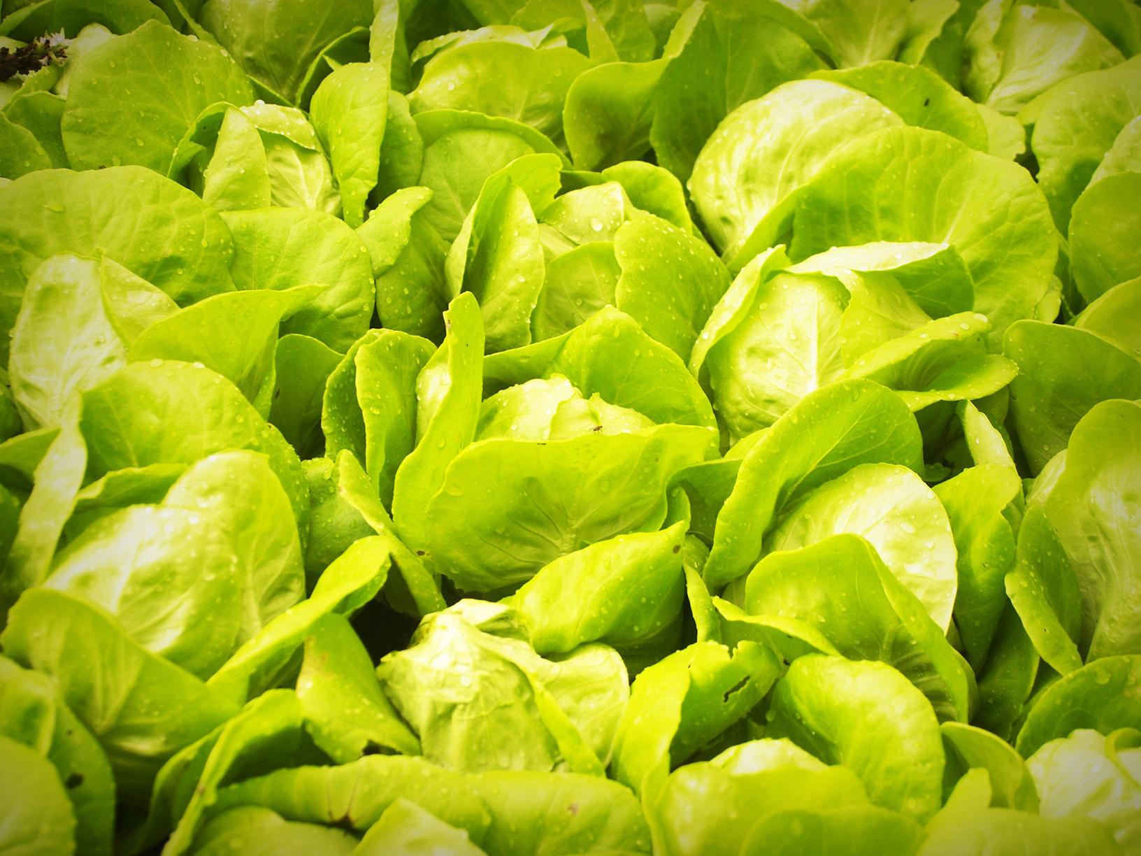High Value Vegetable
