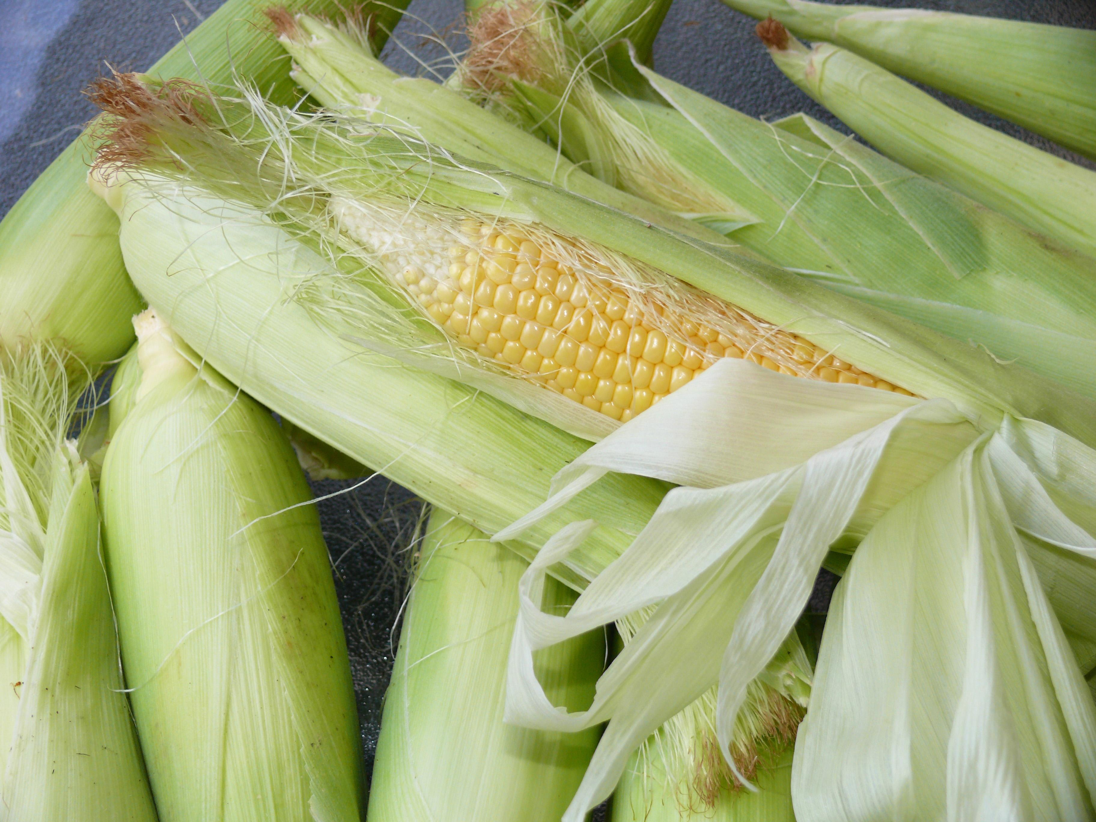 Sweet Corn & Feeds Corn