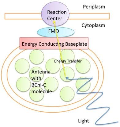 FMO_Complex_Simple_Diagram.jpeg