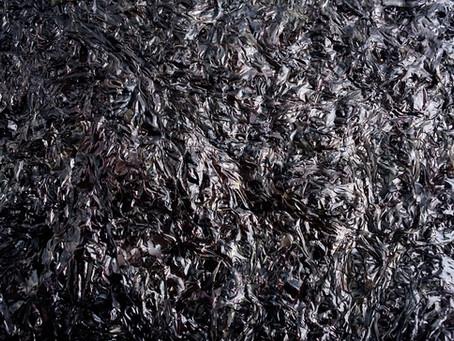 海苔が黒いのは、高級海苔の証!?